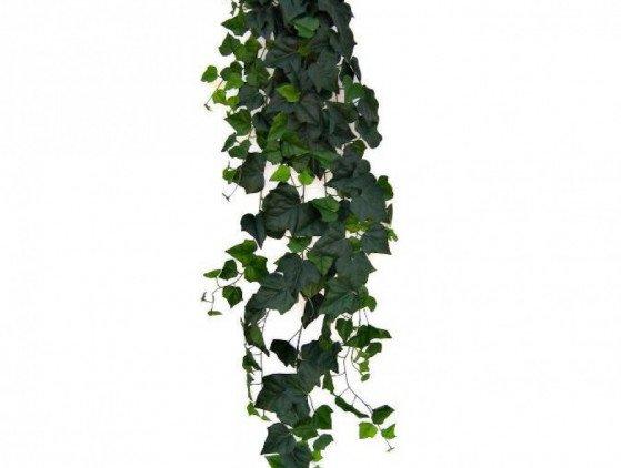 Hedera hangplant bloemen- planten